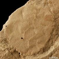 Déferlante fleurie sur l'Europe il y 130 millions d'années