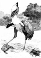 Des « oiseaux de terreur » présents en Europe, il y a 42 millions d'années