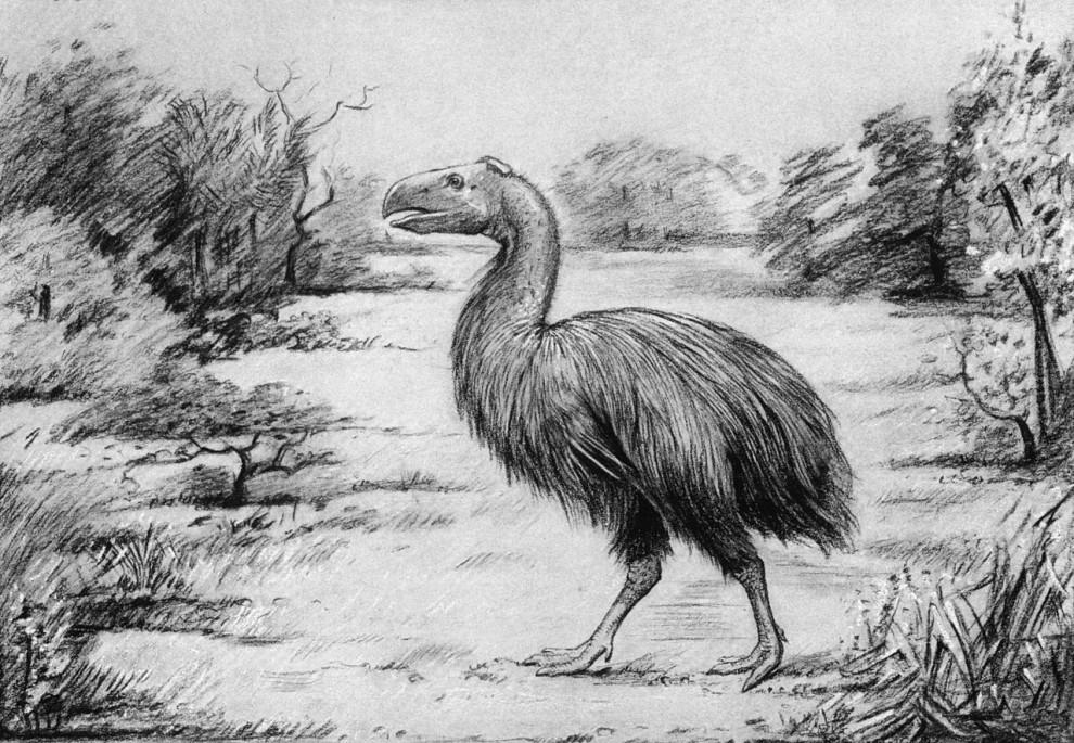 Giant Prehistoric Bird Crushed Seeds, Not Little Horses