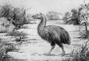 Giant Prehistoric Bird Crushed Seeds, Not Little Horses